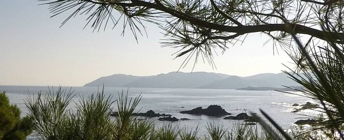 Cap de Creus from behind a pinetree 1100x450